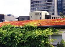 Flachdachsanierung mit Gründachaufbau